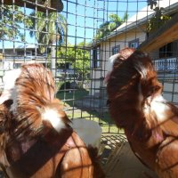 Animal Awareness Day 2015